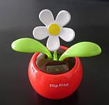 Сонячний квітка Flip Flap, фото 3