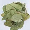 Евкаліпт листя сушені, мелені 5 кг, PL, фото 2