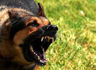 Страхование ответственности владельцев собак