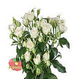 Белая роза спрей Жозефина, фото 2