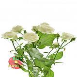 Белая роза спрей Жозефина, фото 3