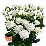 Белая роза спрей Жозефина, фото 4