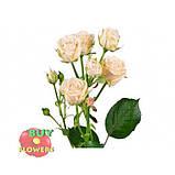 Белая роза спрей Жозефина, фото 6