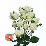 Белая роза спрей Жозефина, фото 7