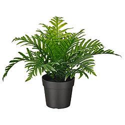 Искусственное растение в горшке IKEA FEJKA Полиподиум 9 см 504.933.49