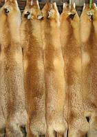 Шкуры рыжей лисы