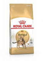 Royal Canin (Роял Канин) Bengal Adult для кошек бенгальской породы от 1 года 10 кг