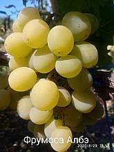 "Саженцы винограда""Фрумоаса Албе"""