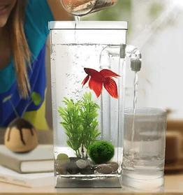FISH TANK CLEAN