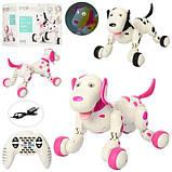 Собака 777-338 радіокер., акум., ходить, танцює, USB, світло,  муз., кор., 39-29-19 см., фото 6
