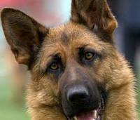 Клещ у собаки. Удаление клеща и защита от клещей.