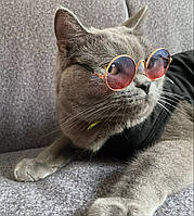 Очки для собак и кошек Multibrand в золотой оправе, розово-голубые (не стекло, пластик)