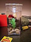 ОПТ Акваріум самоочисний з підсвічуванням My Fun Fish 2л з декоративними камінчиками на дно, фото 6
