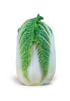 Семена пекинской капусты Ориент Стар F1 2500 шт. Таки Сидс