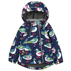 Куртка дитяча демісезонна Птиці Meanbear (90) 4 роки, З утеплювачем, Хлопчикам, 100, 100