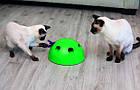 ОПТ Игрушка для кота интерактивная напольная со звуком и светом Поймай мышку Pop and Play, фото 3