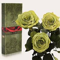 Florich Три долгосвежих розы в подарочной упаковке Лаймовый нефрит (5 карат на коротком стебле) Florich
