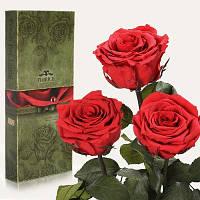 Florich Три долгосвежих розы в подарочной упаковке Алый рубин (7 карат на коротком стебле) Florich