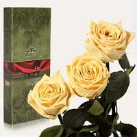Florich Три долгосвежих розы в подарочной упаковке Желтый топаз (7 карат на среднем стебле) Florich