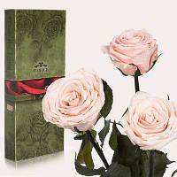 Florich Три долгосвежих розы в подарочной упаковке Розовый жемчуг (7 карат на среднем стебле) Florich