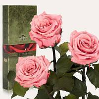 Florich Три долгосвежих розы в подарочной упаковке Розовый кварц (7 карат на среднем стебле) Florich