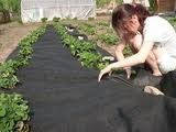 Агроволокно черное Агротекс 60 г/м2 мульча, размер 1,6*100м.п.
