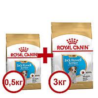 Royal Canin Jack-Russell Puppy 3кг+0,5кг -корм для цуценят породи джек-рассел-тер'єр