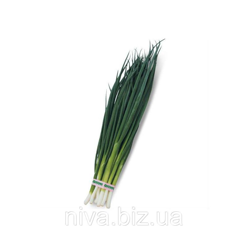 Вулкан насіння цибулі на перо середньоранньої 65-70 днів Kitano Seeds 100 г
