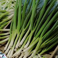 Параде насіння цибулі на перо ранньої темно-зеленої 70 днів Bejo 1 000 насінин