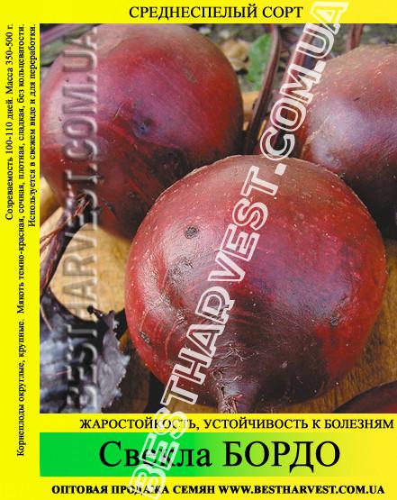 Семена свеклы «Бордо» 25 кг (мешок)