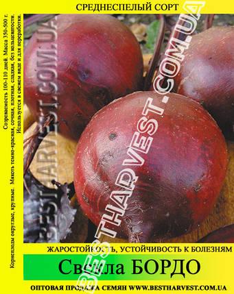 Семена свеклы «Бордо» 25 кг (мешок), фото 2