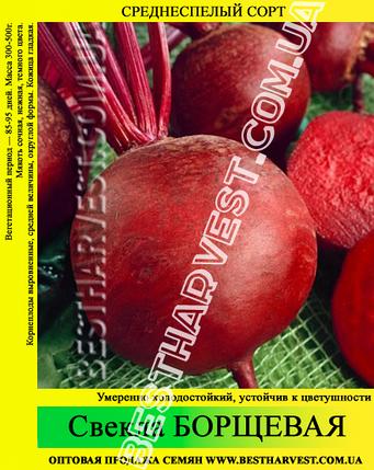 Семена свеклы «Борщевая» 25 кг (мешок), фото 2