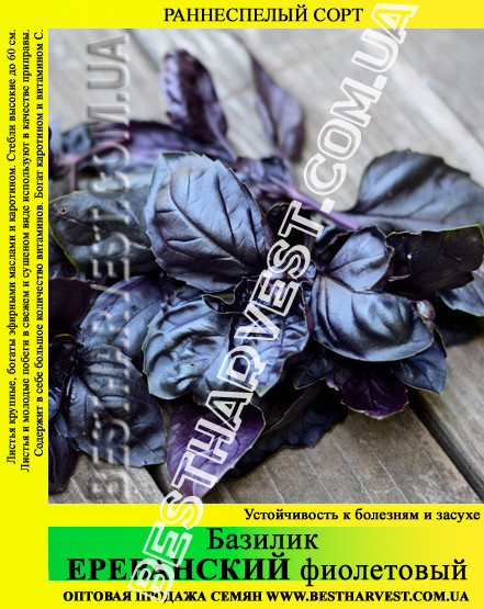 Семена базилика «Ереванский» 0.5 кг