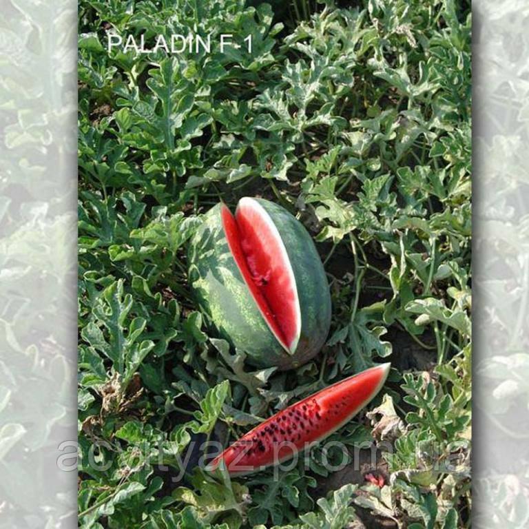Семена арбуза Паладин F1, 1000 семян