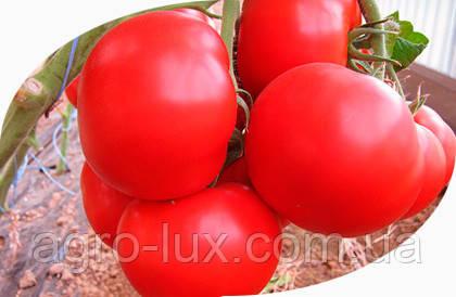 Семена томата Ноэми F1 1000 сем