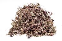 Тимьян обыкновенный, трава Чебрец 50 грамм