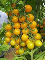 Семена томата Стар Голд F1 250 сем