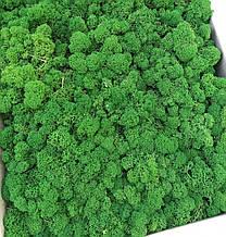 Зелений Мох стабілізований 1 кг упаковка