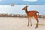 ГРУППОВОЙ ТУР по Японии «Большое путешествие - две столицы и горячие источники», фото 5