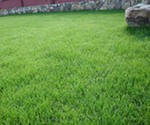 Газонная трава.   Семена газонной травы, семена для газона