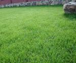 Семена газонных трав для озеленения. Удобрения