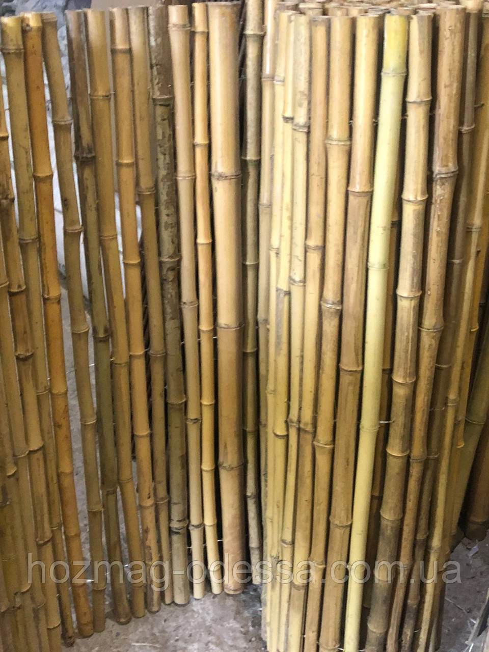 Забор бамбуковый 1,5 м *3,0 м.