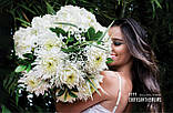 Хризантема Magnum White (Магнум білий) великоквіткова, срезочная розсада, фото 4