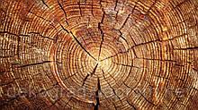 Фотофон А3 (42х29,7см) Срез дерева