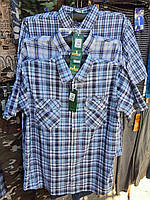 Рубашка мужская летняя с коротким рукавом норма в розницу