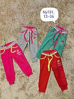Спортивные штаны для девочек оптом, Setty Koop, 12-36 мес.,  № Ny731
