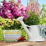 Какие цветы посадить в мае?