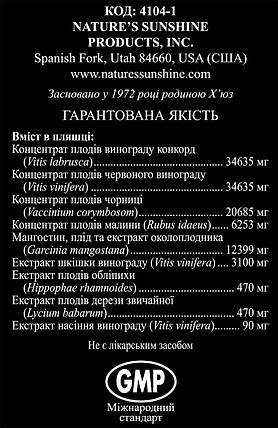 Zambroza Замброза, НСП, США, NSP. Антиоксидант. Эликсир здоровья., фото 2