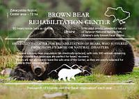 "Gf открытка ""Центр реабилитации бурых медведей. Карпаты"", фото 1"