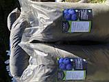 Грунт для лохини Київ Грунт для посадки лохини продаж Київ. Кислий Торф., фото 2